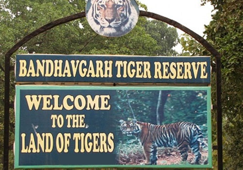 Bandhavgarh National Park - See Tigers in India
