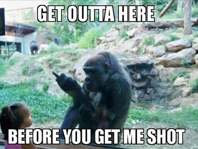 Harambe - Funny Viral Meme
