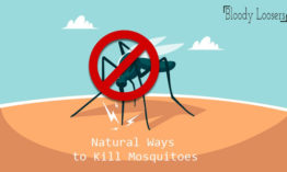 How to Kill Mosquitoes without Medicine?