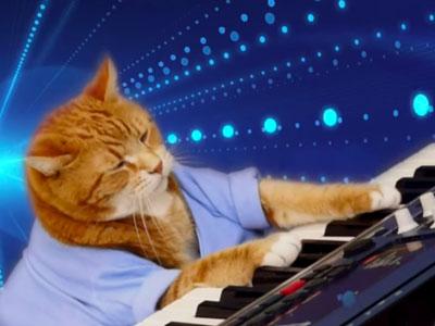 Keyboard Cat - Funny Viral Meme