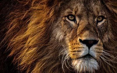 Lion - Bulgaria