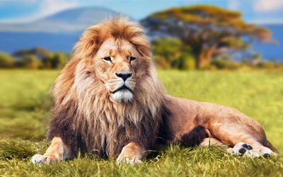 Lion - Scotland