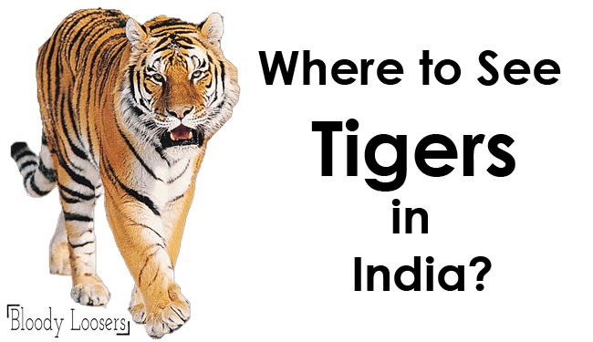 Where to See Tigers in India