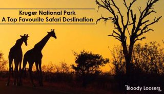 Kruger National Park - A Top Favourite Safari Destination